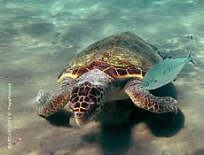 TRIBUTE TO THE WORLD SEA TURTLE DAY. TURTLES AND HUMANS- CAN WE ALL LIVE TOGETHER?