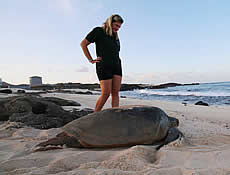 Jo Farrow's sea turtle journey: from Zakynthos to Ascension Island and back!