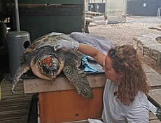 A great opportunity to volunteer in ARCHELON through the European Solidarity Corps (ESC)